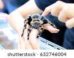 Mexican Redknee Tarantula ...