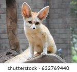 sitting fennec or desert fox or ... | Shutterstock . vector #632769440