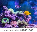 Reef Tank  Marine Aquarium....