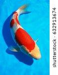 Japanese Koi Carp Fish With...