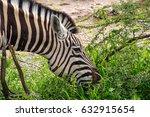 close up of zebra eating grass... | Shutterstock . vector #632915654