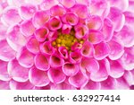 pink dahlia flower macro shot.... | Shutterstock . vector #632927414