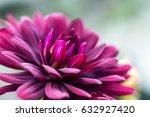dahlia flower macro shot.... | Shutterstock . vector #632927420