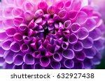 violet dahlia flower macro shot.... | Shutterstock . vector #632927438
