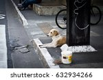homeless dog on street | Shutterstock . vector #632934266