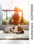 Stock photo jack russel puppy sleeping on white fluffy carpet hygge concept 632943068
