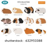 Guinea Pig Breeds Icon Set Fla...