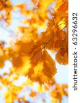 autumn landscape. bright... | Shutterstock . vector #63296632