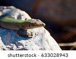 green lizard | Shutterstock . vector #633028943