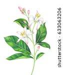 watercolor lemon branch with... | Shutterstock . vector #633063206