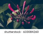 beautiful flower blossom in the ... | Shutterstock . vector #633084260