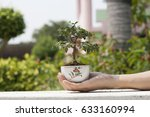 miniature bonsai small tree on... | Shutterstock . vector #633160994