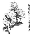 white wild roses flowers... | Shutterstock . vector #633202049