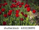 tulips | Shutterstock . vector #633228890