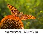 butterfly argynnic paphia | Shutterstock . vector #63324940