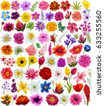 vector design of colorful... | Shutterstock .eps vector #633255560