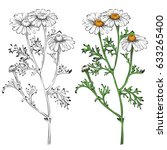 chamomile silhouette and... | Shutterstock .eps vector #633265400
