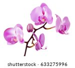 pink orchid flowers isolated on ... | Shutterstock .eps vector #633275996