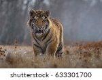 siberian tiger  panthera... | Shutterstock . vector #633301700