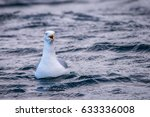 One Seagull Floating On The...