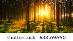 Silent Forest In Spring With...