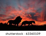 Lions In The Sunset On The...