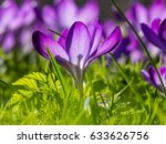 view of blooming spring flowers ...   Shutterstock . vector #633626756