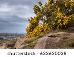 Edinburgh In Background Gorse...