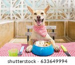 hungry chihuahua dog eating... | Shutterstock . vector #633649994