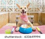 Hungry Chihuahua Dog Eating...