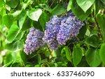 Blooming Varietal Selection...