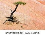A Struggling Tree In The Desert