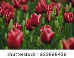 tulip | Shutterstock . vector #633868436