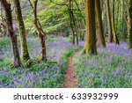 Beautiful Bluebell Woods In Th...