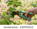 trimming bushes | Shutterstock . vector #633952013