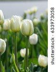 a photo of flowers. beautiful... | Shutterstock . vector #633973058
