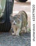 Homeless  Street Cat On The Hunt