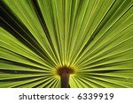 a nice plant pattern for a... | Shutterstock . vector #6339919