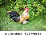 a mature cock on the garden   Shutterstock . vector #633998666