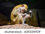 Stock photo funny monkey 634104929
