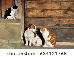 Stock photo cats and dog outside the cottage 634121768