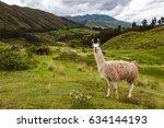 llama  cuzco  peru   circa... | Shutterstock . vector #634144193