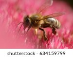 A Honey Bee On A Pink Flower