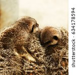 Small photo of Meerkats in a huddle