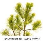 pinus strobus pine isolated on... | Shutterstock . vector #634179944