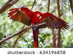 Red And Green Macaw  Ara...