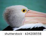 Head Of A Pelican  Closeup Loo...