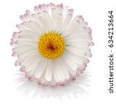 Beautiful Single Daisy Flower...