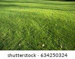 green grass  meadows  park     Shutterstock . vector #634250324