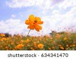 starburst flowers in the field. | Shutterstock . vector #634341470